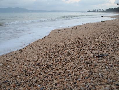 珊瑚海岸を散歩