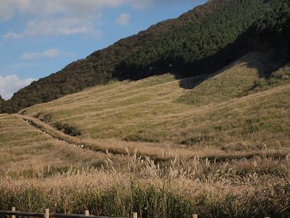 2012年 秋 仙石原のすすき