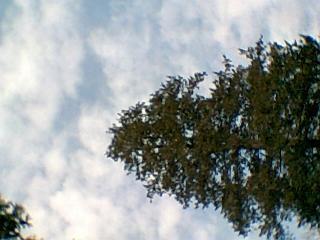 photo005_convert_20110103163328.jpg