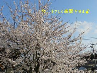 P4180020_R.jpg