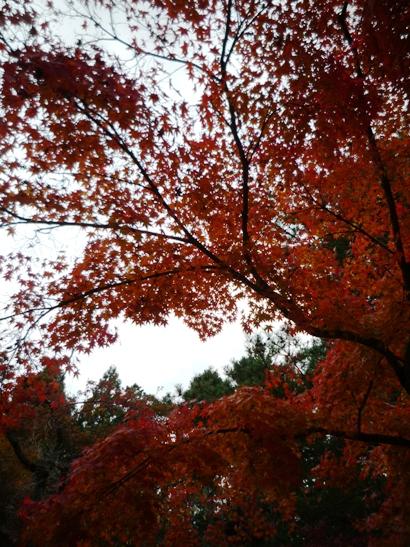 京都2011・11 (5)