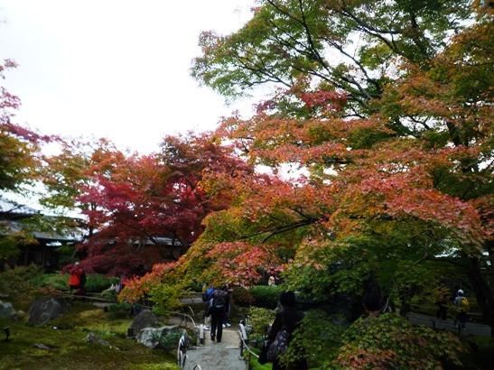 京都2011・11 (8)