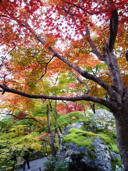 京都2011・11 (11)