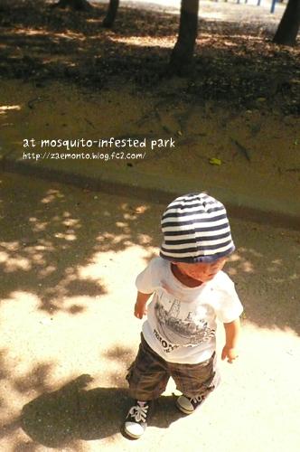 蚊の多い公園にて