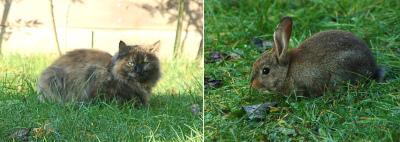 Cat vs Rabit 01