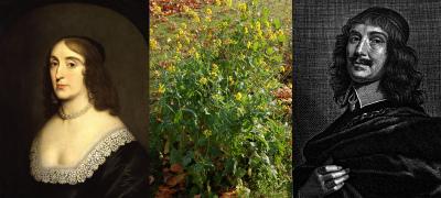 Elizabeth en Honthorst