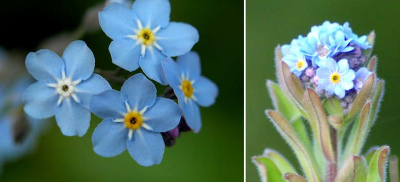 多い花びら 野原ワスレナグさ