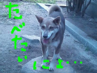 犬のジロー