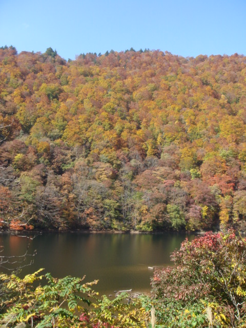 水上の紅葉