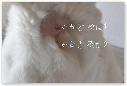 DSC_1516_20110223000346.jpg
