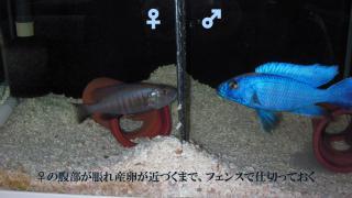アーリー♂&♀