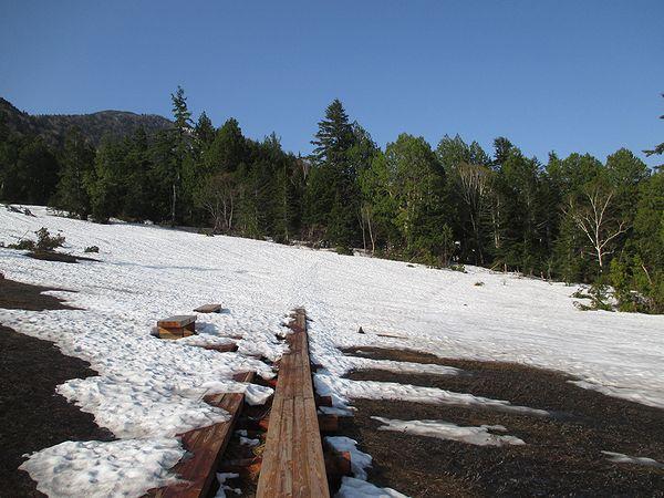 燧裏林道の木道