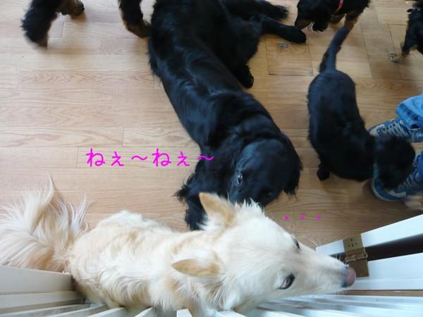 20120615_2.jpg