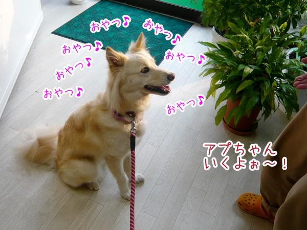 20120712_5.jpg