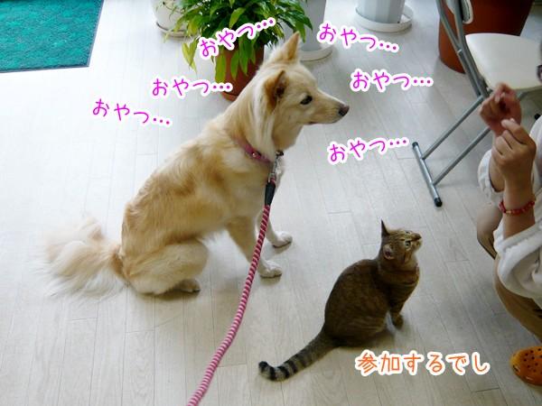 20120712_6.jpg
