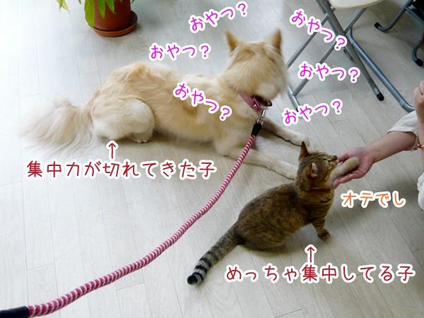 20120712_7.jpg