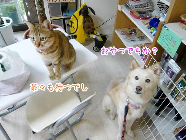20120719_3.jpg