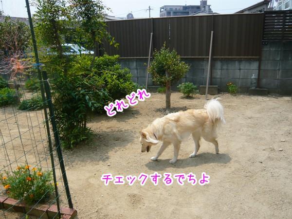 20120725_14.jpg