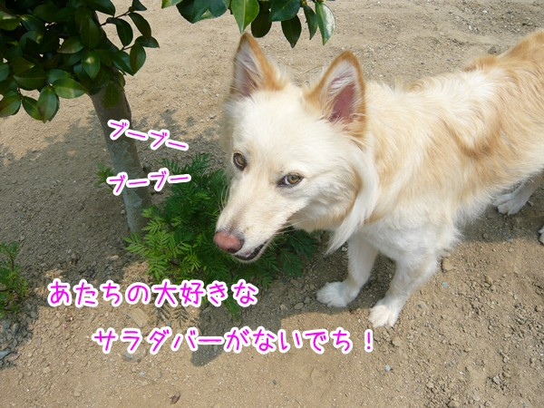 20120725_15.jpg