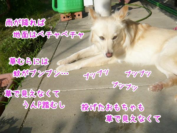 20120725_2.jpg