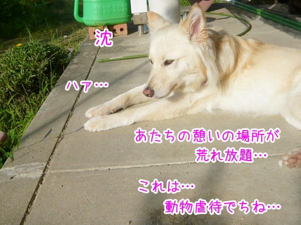 20120725_3.jpg