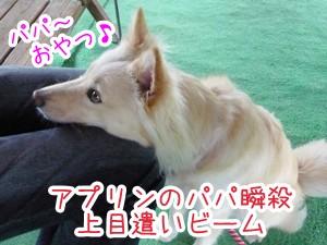 20120806_13.jpg