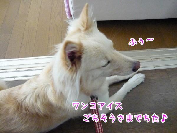 20120811_4.jpg