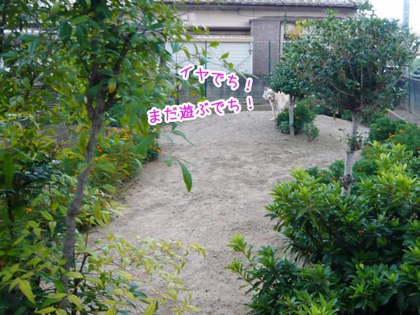 20120820_4.jpg