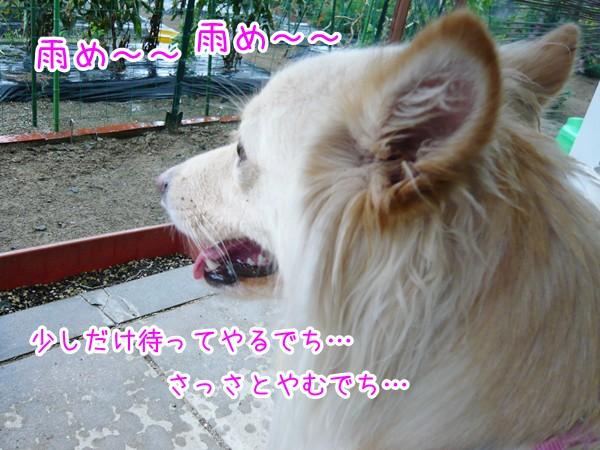 20120820_5.jpg