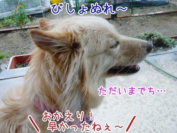 20120820_7.jpg