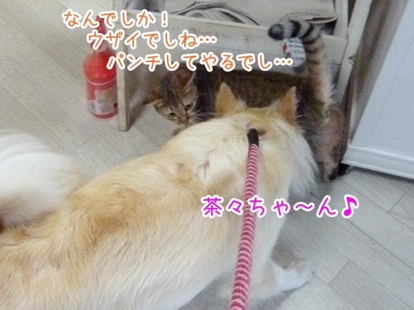 20120821_7.jpg