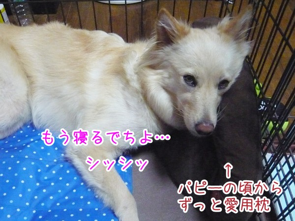 20120907_4.jpg