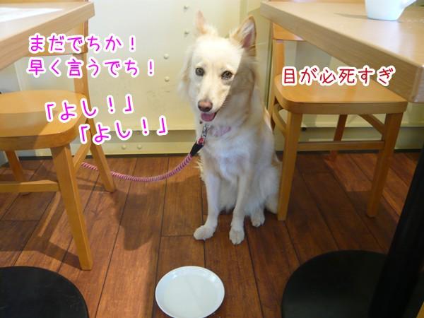 20120912_5.jpg