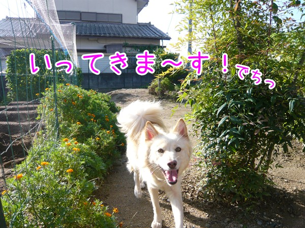 20120913_3.jpg
