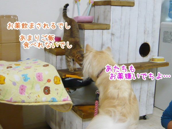 20120914_8.jpg