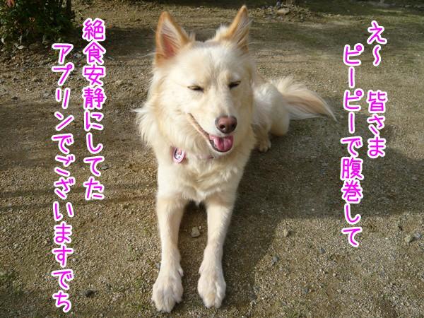 20120918_1.jpg