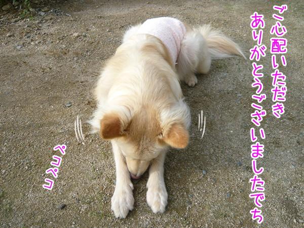 20120918_2.jpg