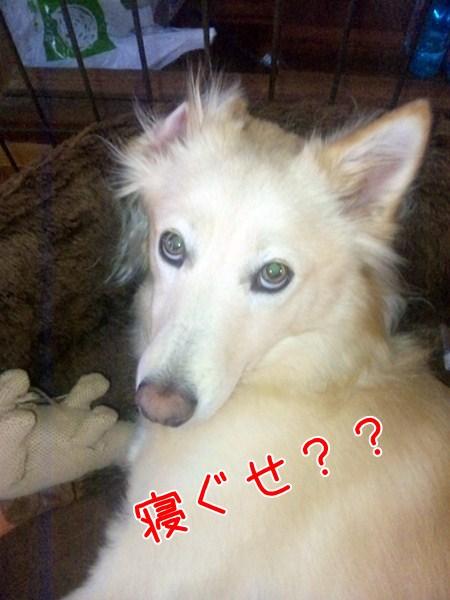 20121110_1_1.jpg
