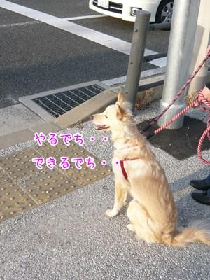 20121113_2_1.jpg