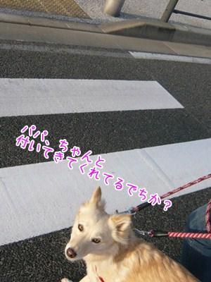 20121113_5.jpg