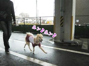 20121120_2.jpg