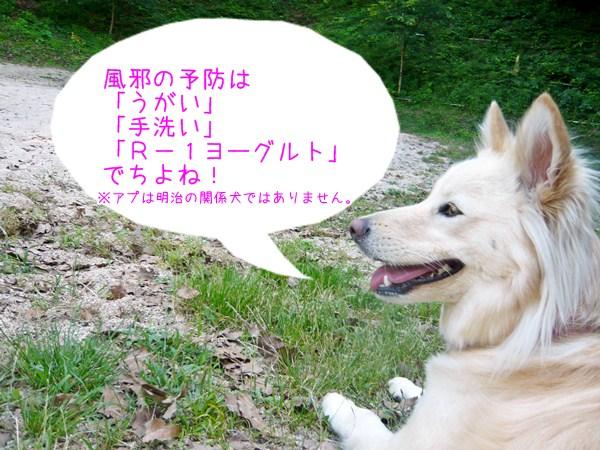 20121124_1_2.jpg