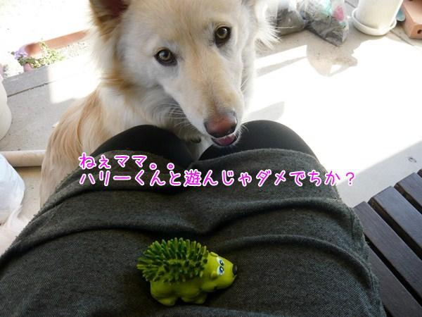 20121201_5_1.jpg