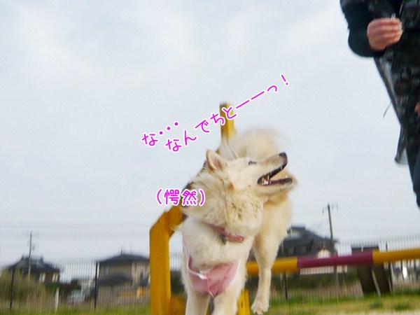 20121204_3.jpg