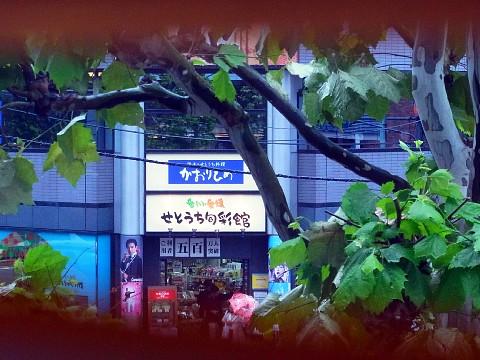 chiyagyu13.jpg