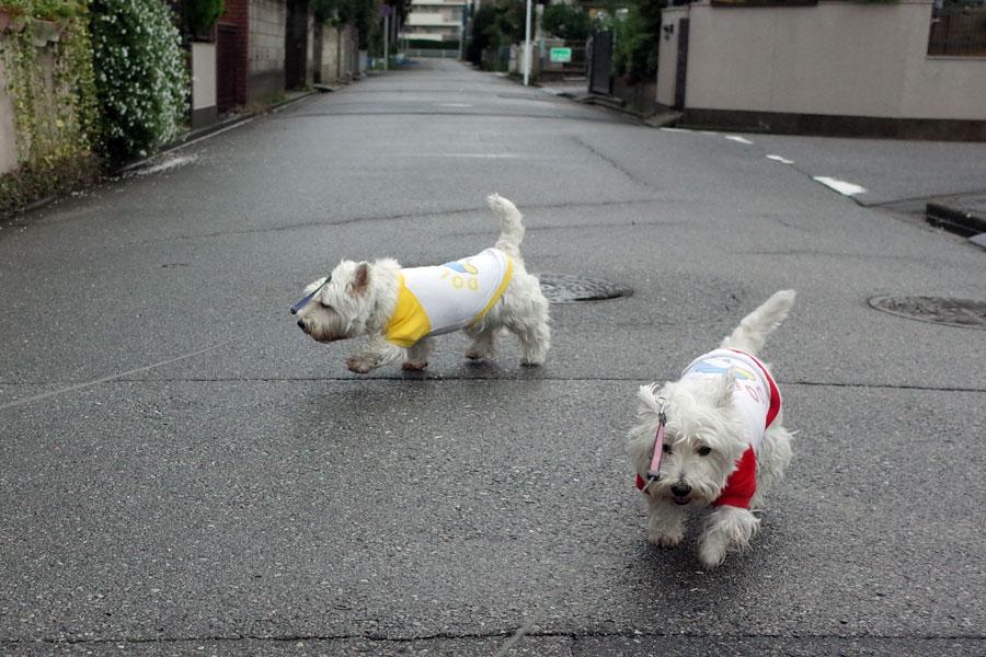 taifukitakedosanponiiketanoha4.jpg