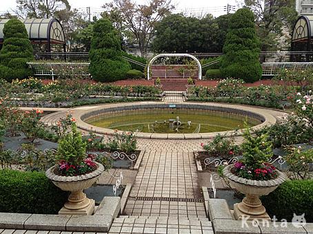 roses_5_20121019142201.jpg