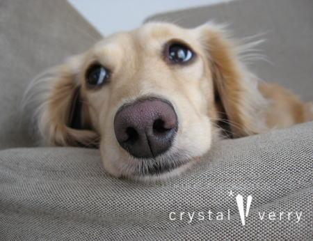 crystal-verry* クリスタルベリー*オーナーのブログ*-愛犬 ミニチュアダックス