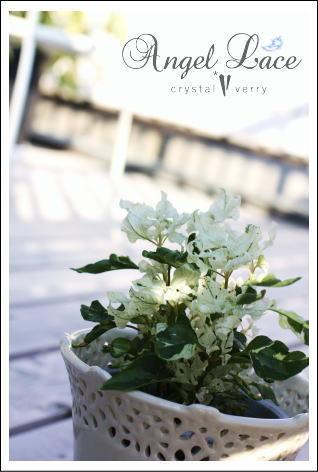 crystal-verry* クリスタルベリー *・オーナーのブログ・*-エンジェルレース