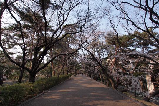 20110403_shukugawa_park-01.jpg